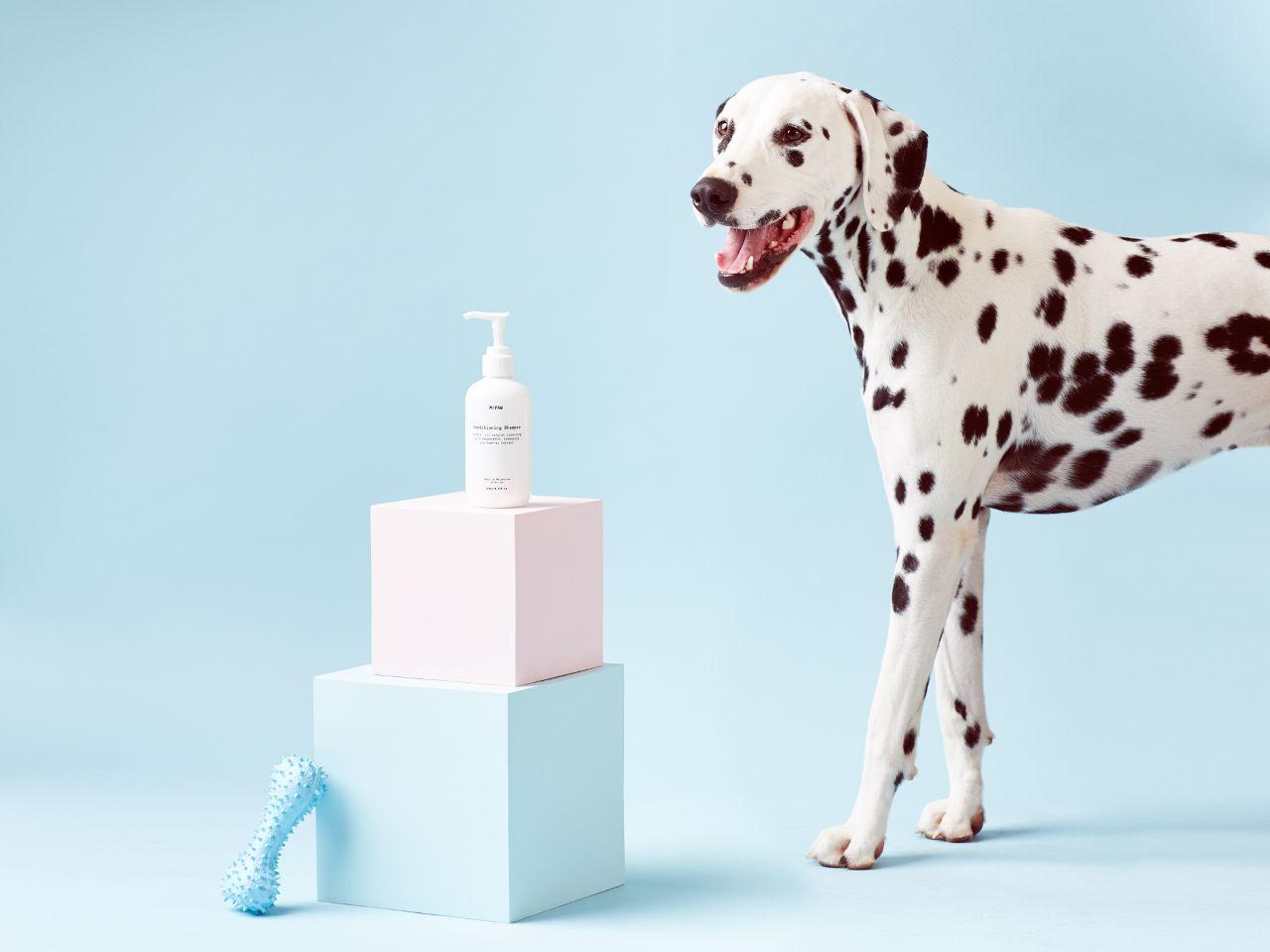 All Natural Vegan Dog Shampoo From Mr Paw Vegan Dog Dog