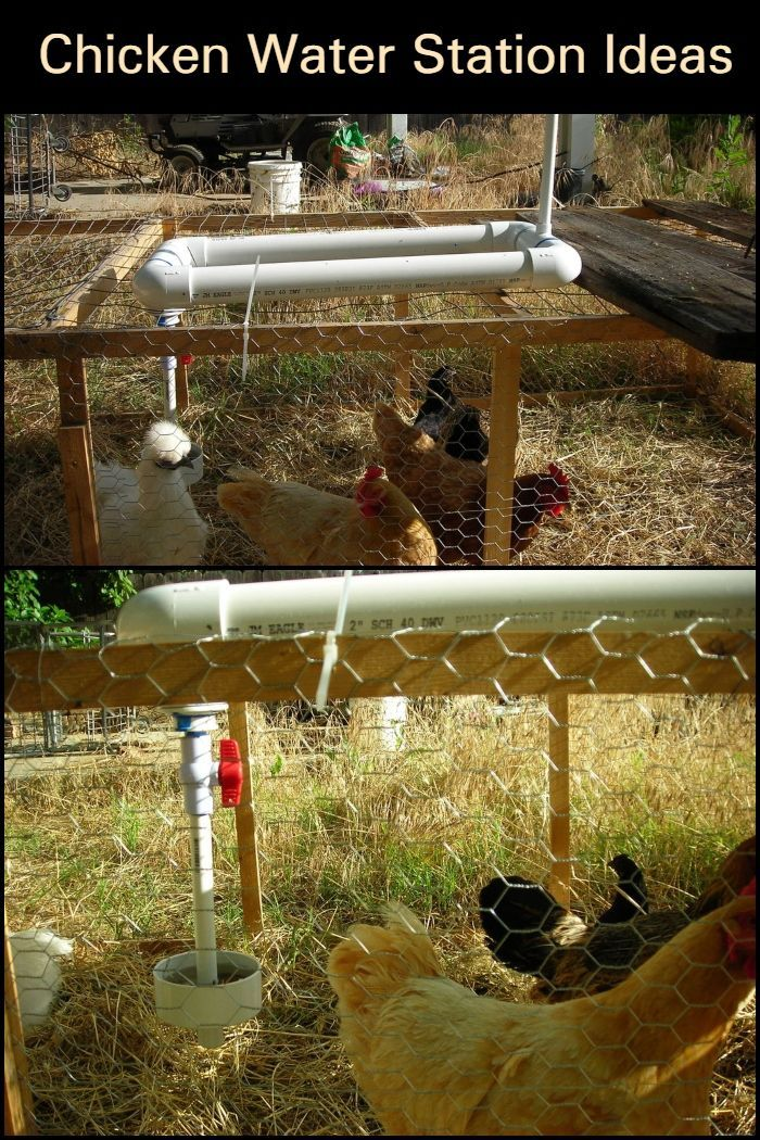 Chicken Water Station Ideas Chickens Backyard Chicken Waterer Diy Chicken Coop