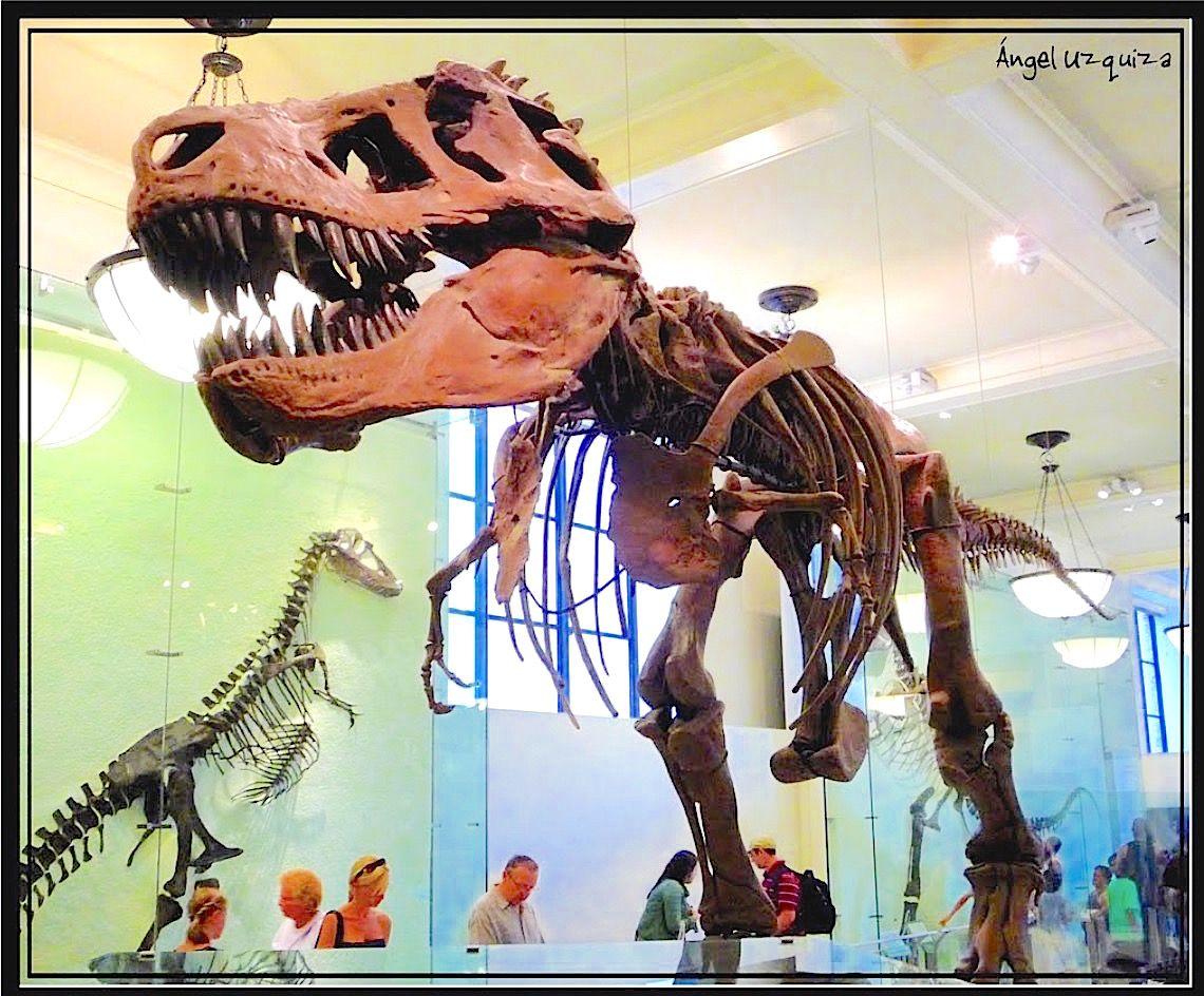 TyrannoSauro frontale