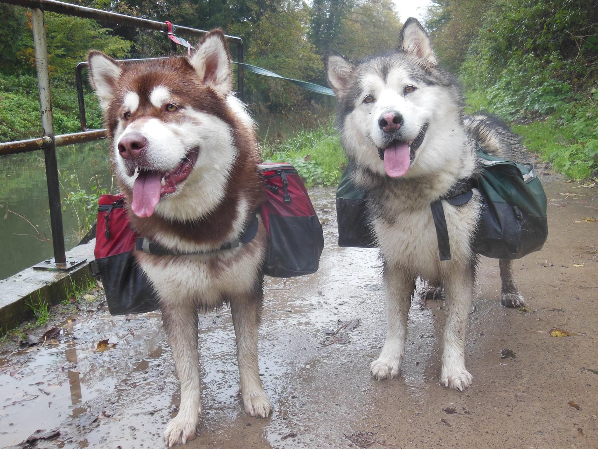 Denali And Yukon Working Towards Their Backpacking Titles Wearing Their