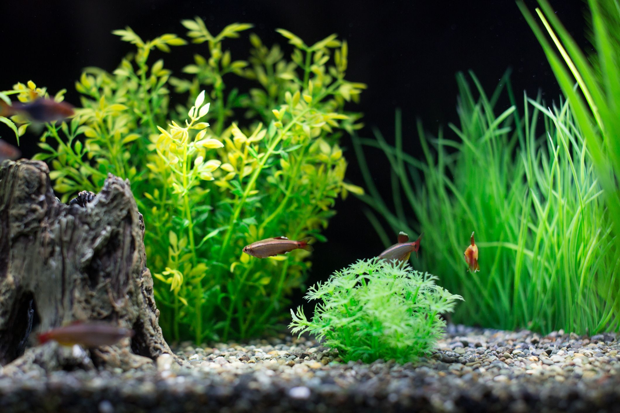 Why Stocking Your Aquarium Evenly With The Right Fish Is