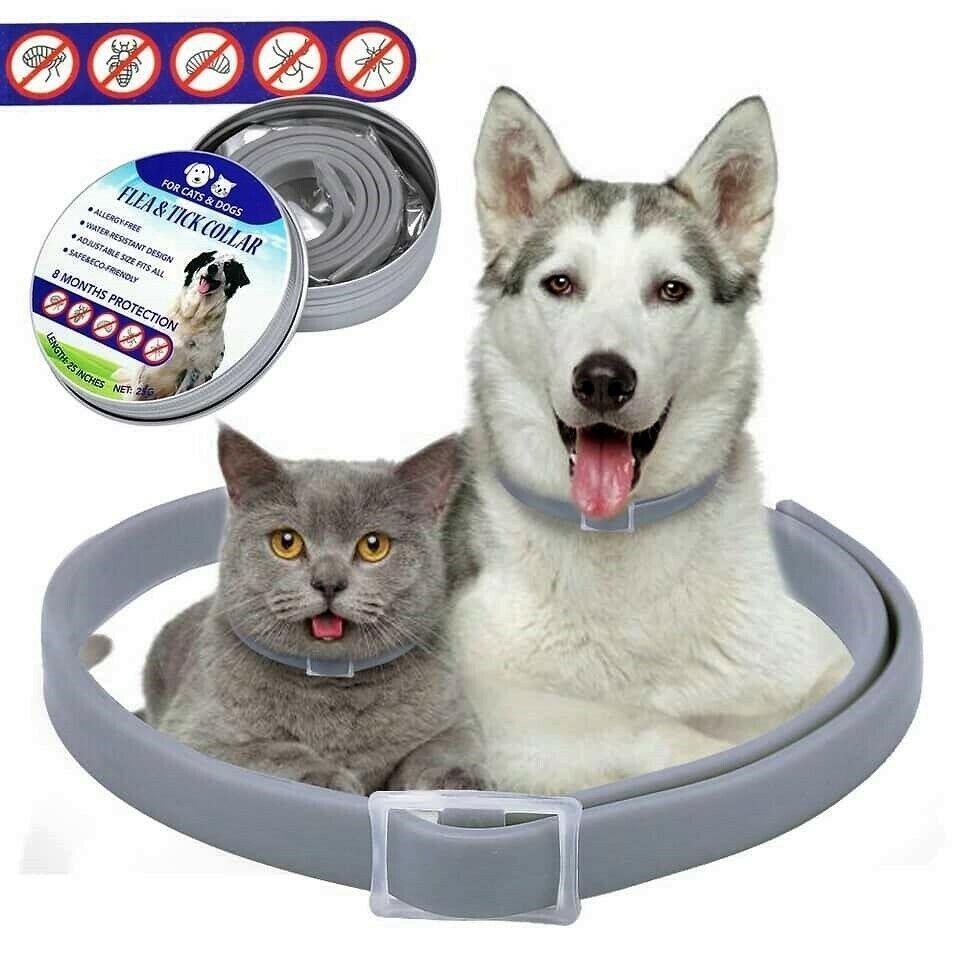 Seresto Flea And Tick Collar For Cat Up To 18lbs 8 Month Protection Ebay Fleas Cat Pet Supplies Flea Collar