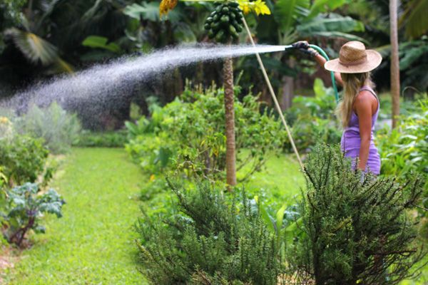 Watering Garden: How Often to Water Garden | Water and Gardens