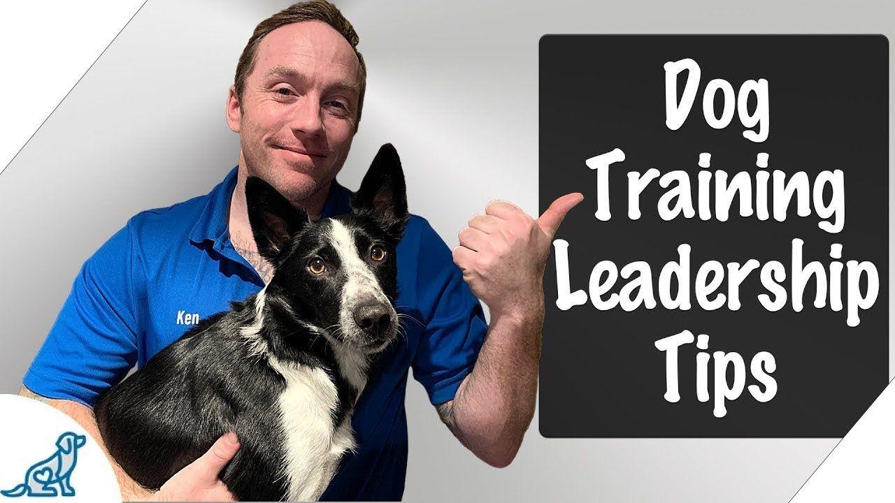 Leadership Dog Training 7 Leadership Tips Professional Dog