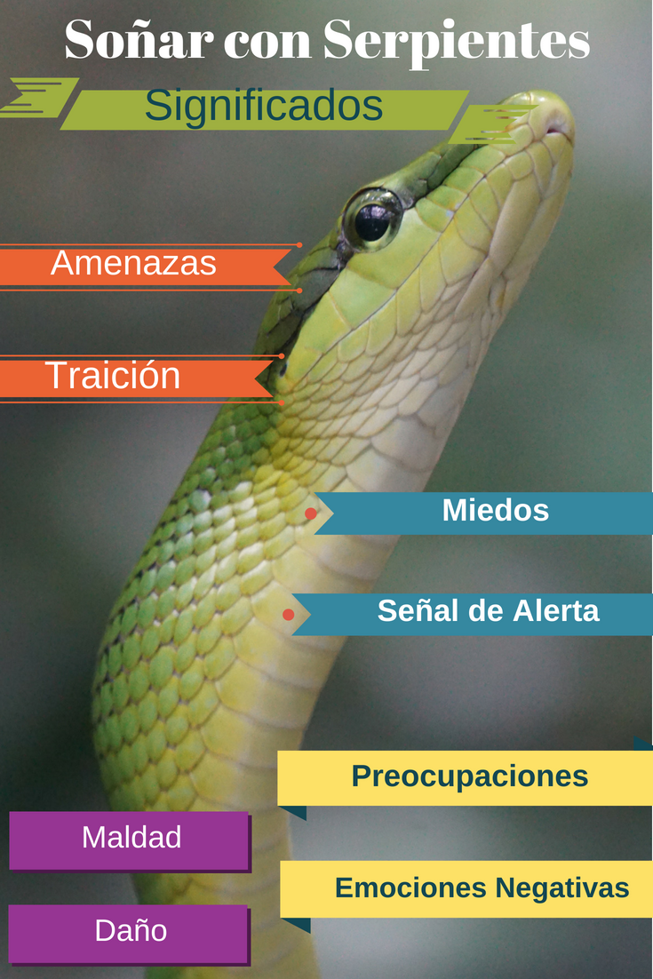Que Significa Soñar Con Serpientes Serpientes Culebras Sueños