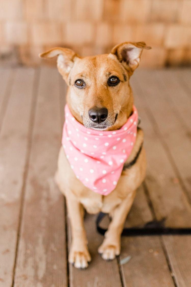 Puppy Love Photoshoot Dog Kisses Puppies Dog Valentines