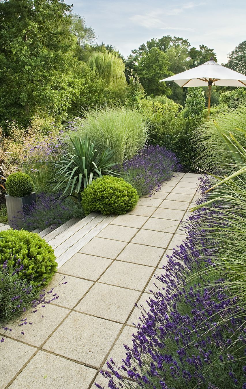 Lavenders Silver Spears Pittosporum and grasses make for a lush
