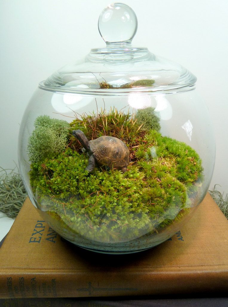 Covered Vase Terrarium Different Kinds Of Moss Lichen Interesting