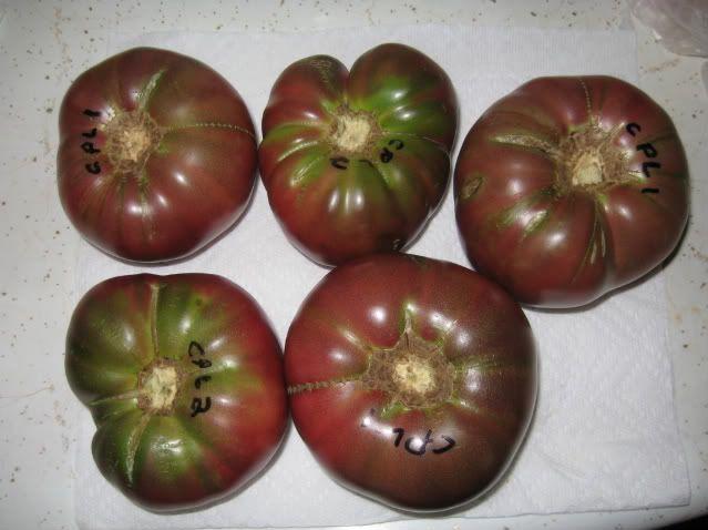 When To Pick Cherokee Purple Growing Tomatoes Forum 400 x 300