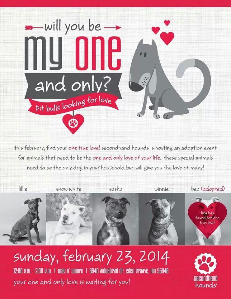 MN Secondhand Hounds Adoption Event! Dog adoption event