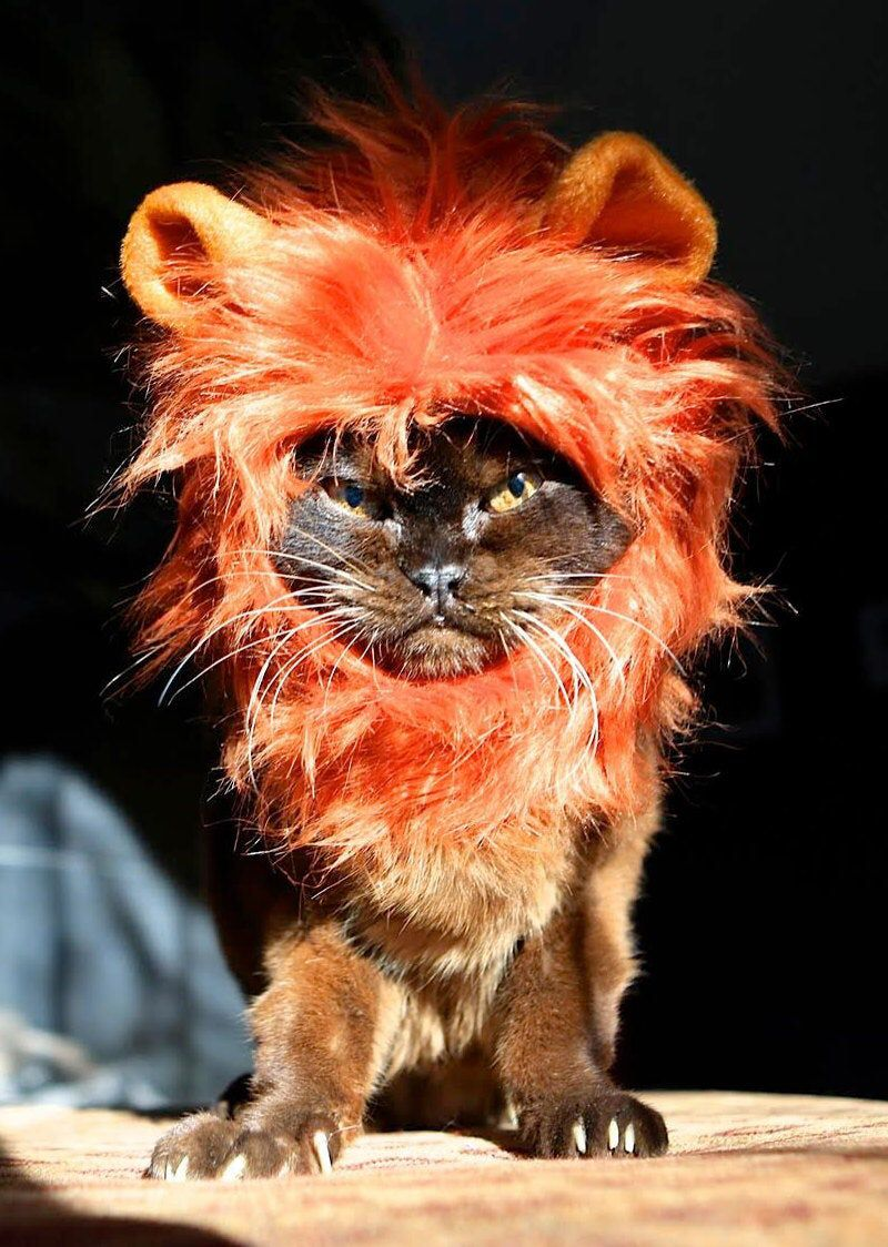 Cat- Dog Lion Mane for cats and dogs in signature gift hat box