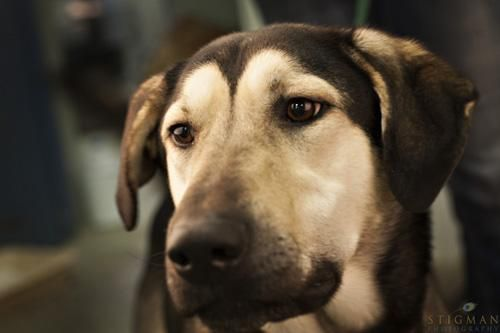 Adopt Shadow On Pets Poor Dog Detroit Lakes Minnesota