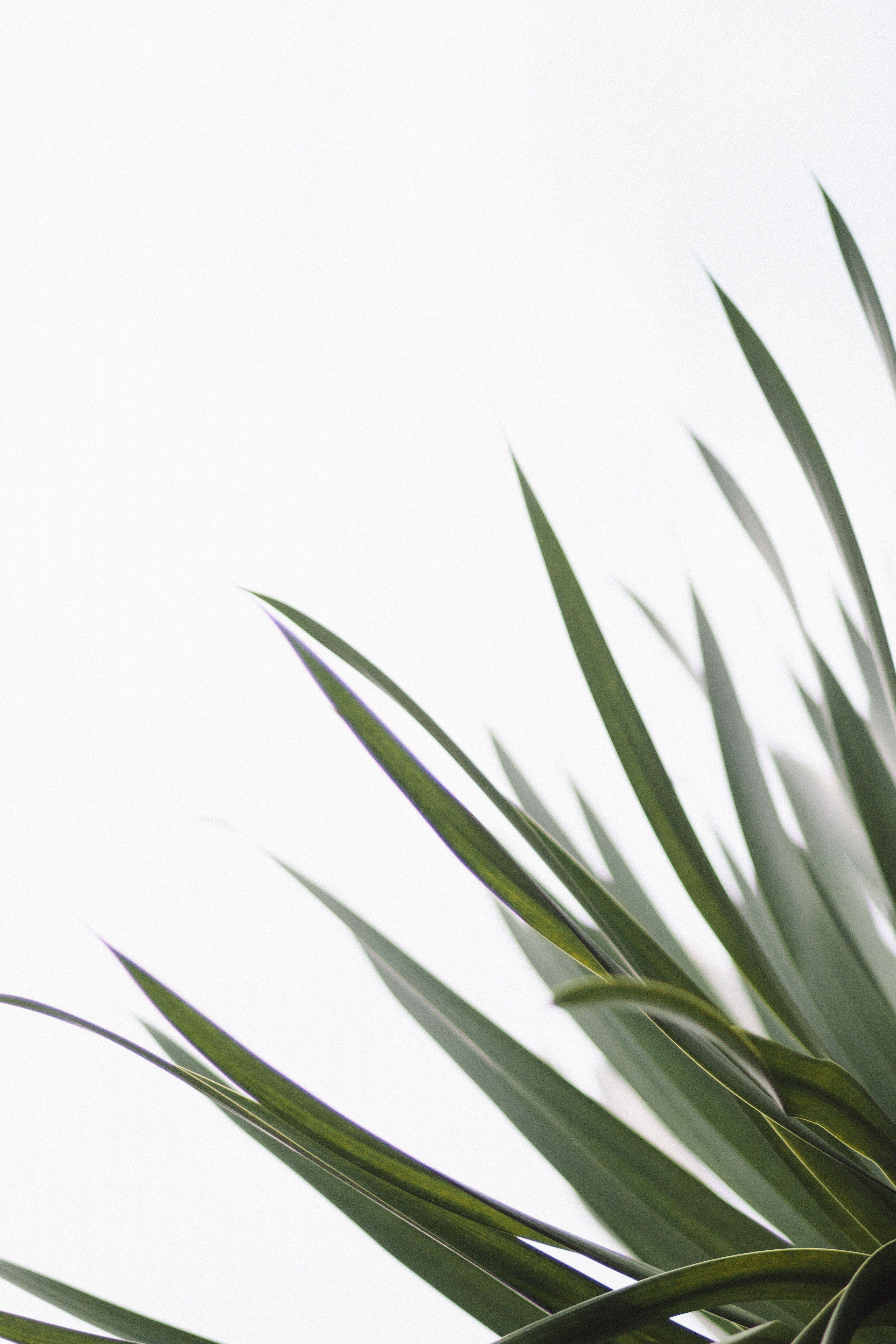 Custom Orders In 2020 Minimalist Wallpaper Plant Images Green Leaves
