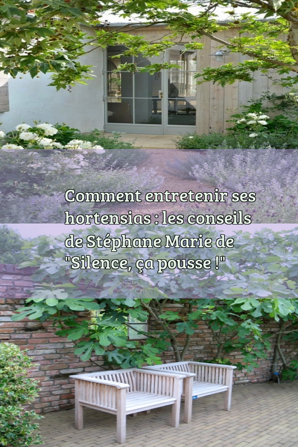 Photos De La Maison De Stephane Marie : photos, maison, stephane, marie, Comment, Entretenir, Hortensias, Conseils, Stéphane, Marie,