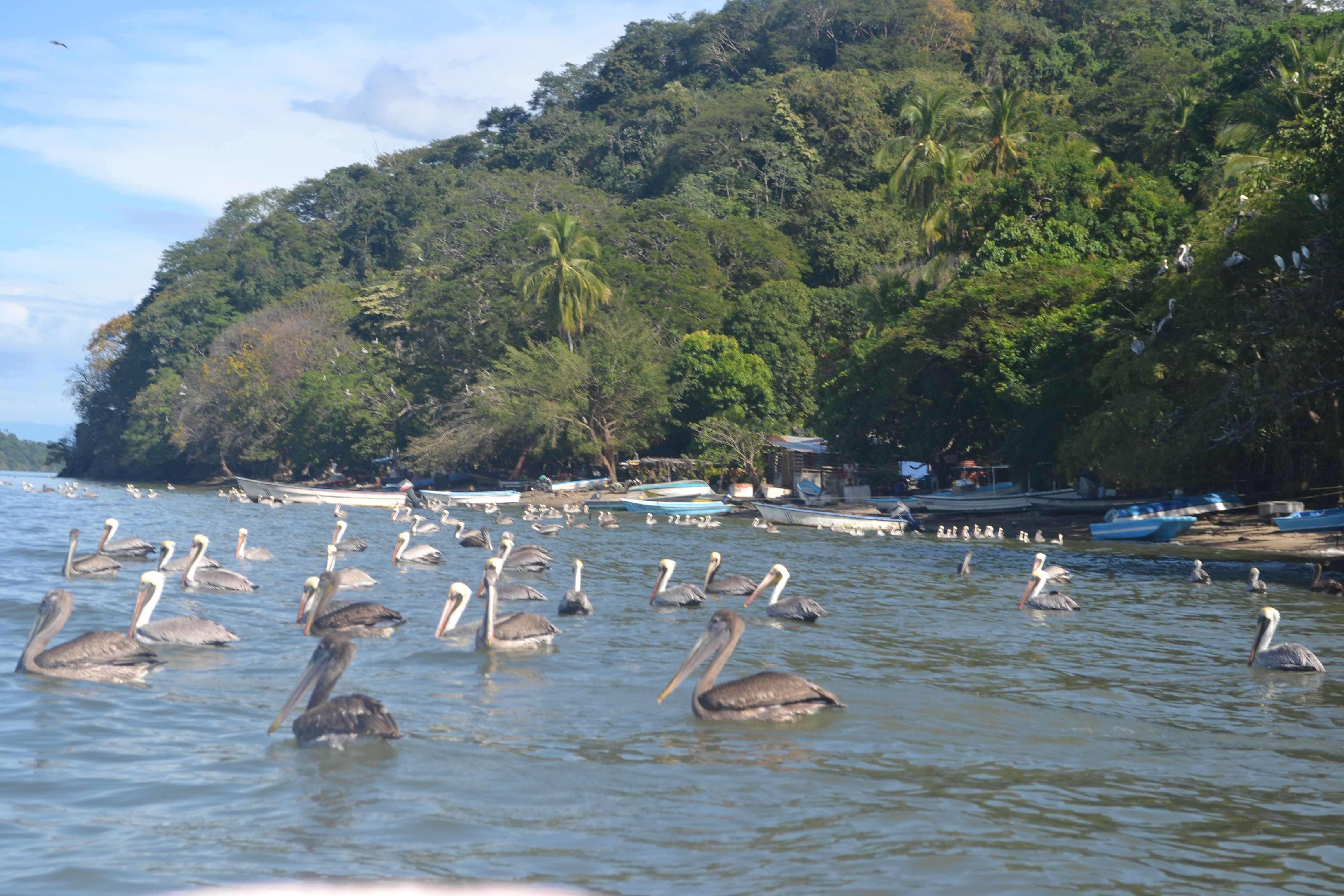 Isla venado puntarenas places i have been for Villas tortuga celestino sinaloa