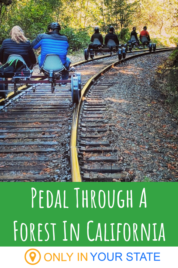 Pedal Through The Forest In California On A Conver
