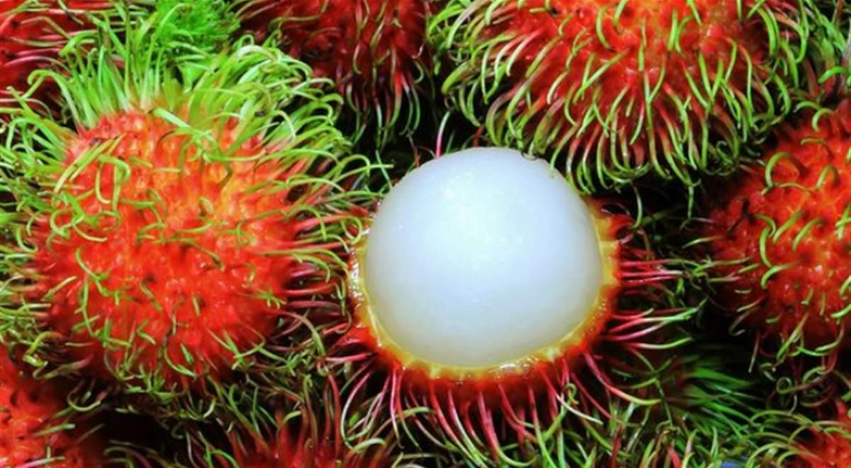 Weird Fruits 7