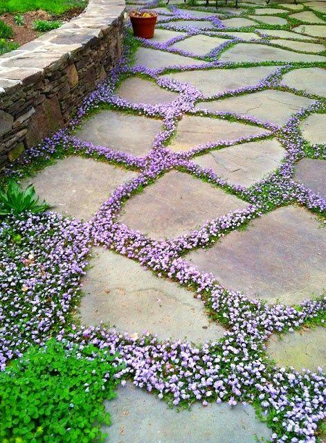 the tiny flowers growing between the walking stones is genius