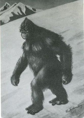 #Yeti #AbominableSnowmen #Tracks #CreatedCasts  We may learn more from these track photos yet!