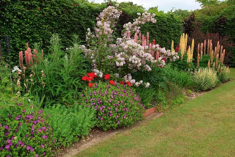 Flower Garden Border Ideas | Credainatcon.com