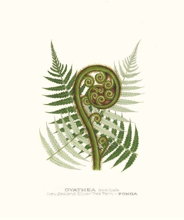 2de53485a Ponga Fern Tattoo, Tree Tattoo Back, Back Tattoos, Animal Tattoos, Silver  Fern