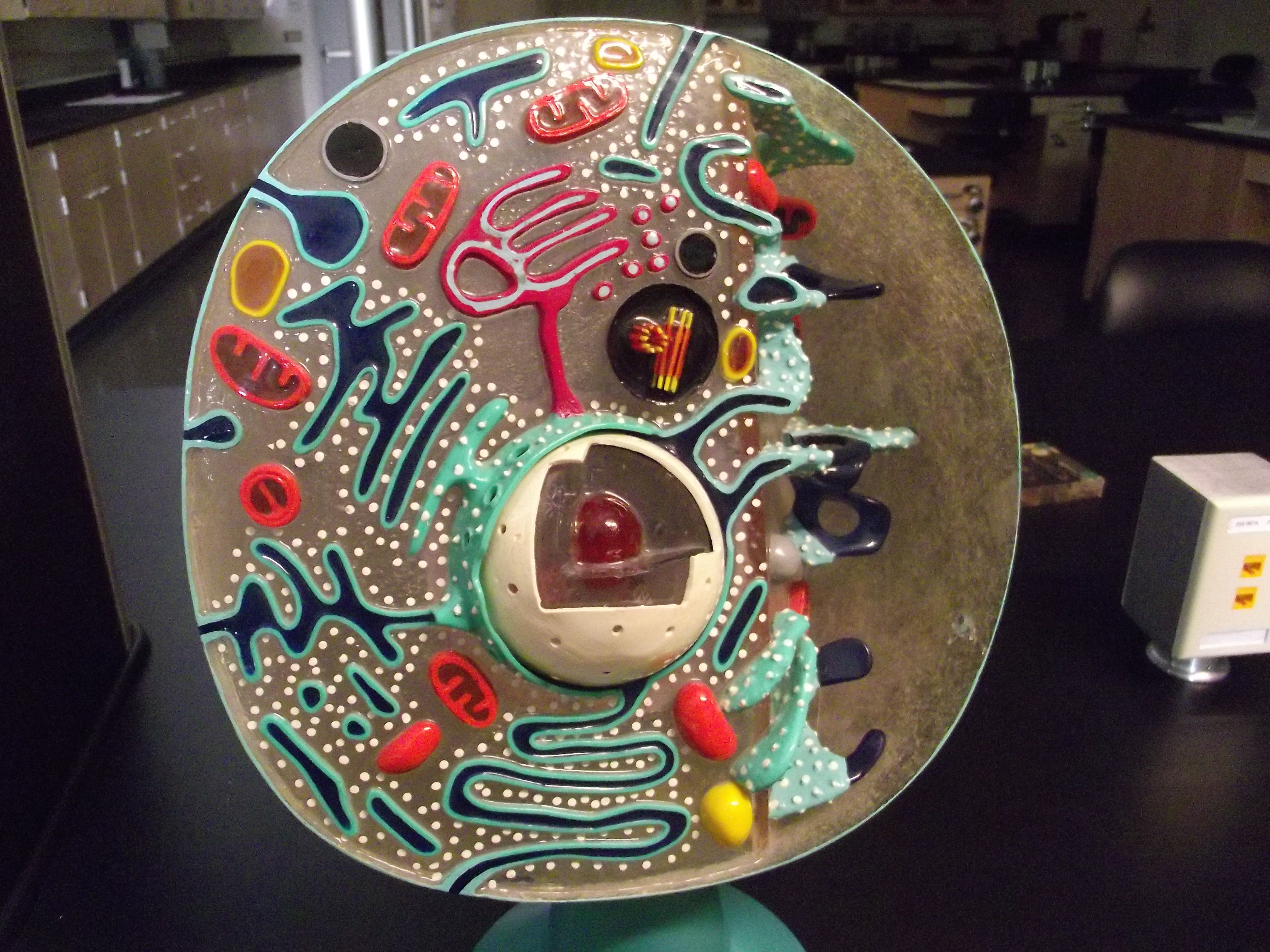 animal cell model - Could maybe use this image with a ...