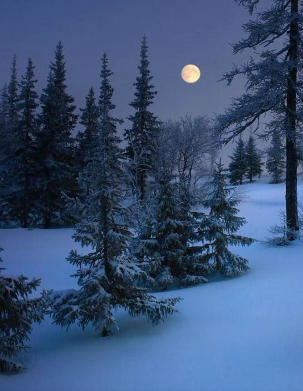 Pin De Lark Rowe En Winter Wonder Lands Fotografia De Invierno Escenas De Invierno Paisaje Nieve