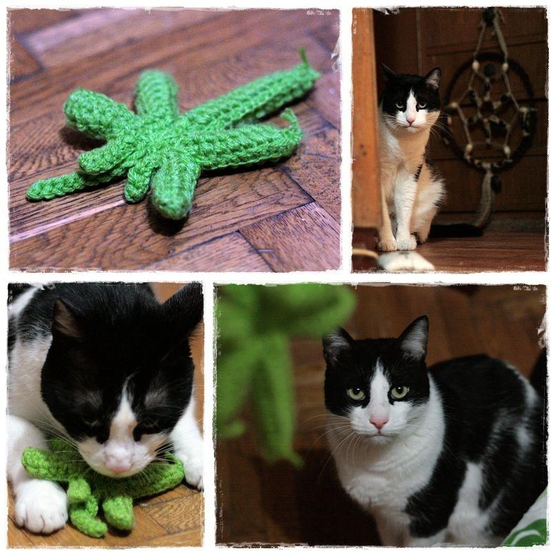 crochet cat toy | cats | Pinterest