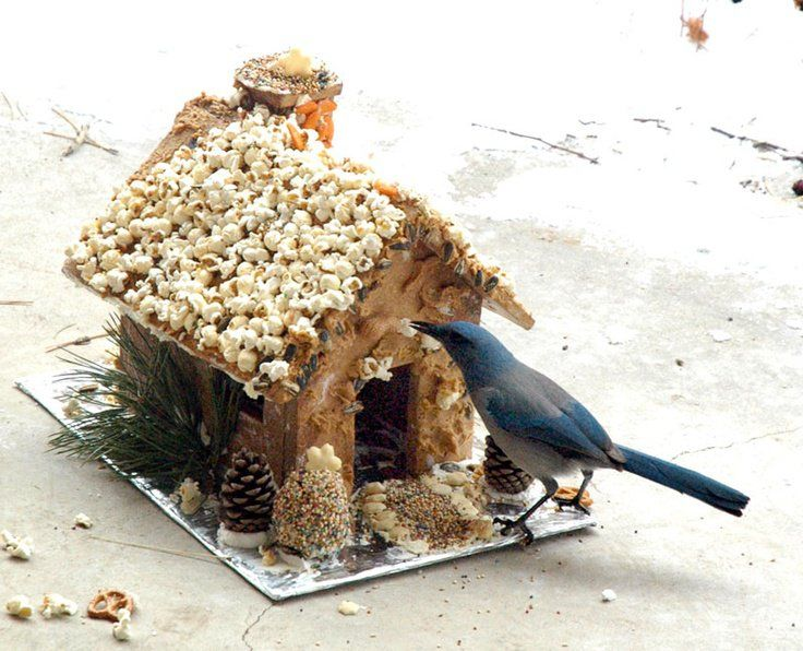"""""""Ginger-bird House"""" - decorate a gingerbread house for the birds with popcorn, pretzels, peanuts, sunflower seeds, & a colorful variety of bird seed.   FollowPics"""