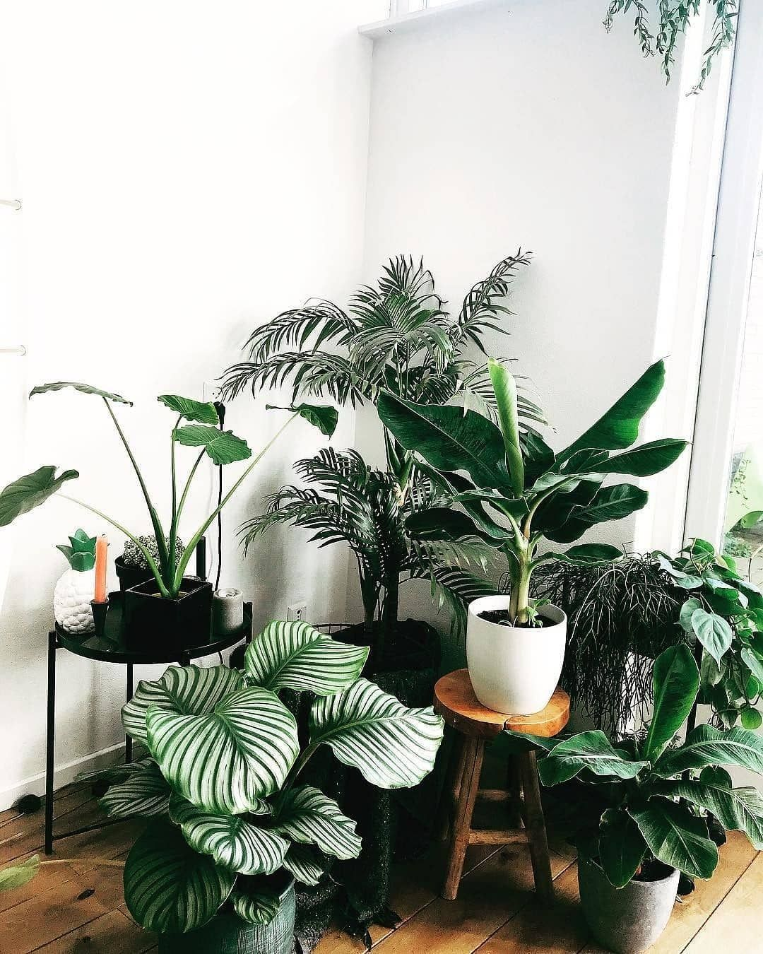 Olivra Homedecor On Instagram Lovely Little Plant Corner In The Living Room Tag Someone With A Gorgeous House Plants Decor Plant Decor Small Indoor Plants