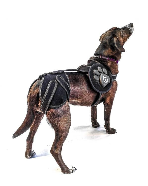 The Best Dog Knee Braces (Review) in 2020 Dog braces