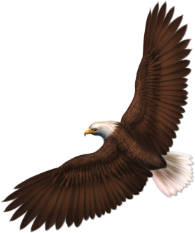 Bald Eagle Flying Png Image Bald Eagle Eagle Bird Clipart
