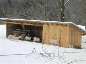 goat building - looks like a Park goat barn!