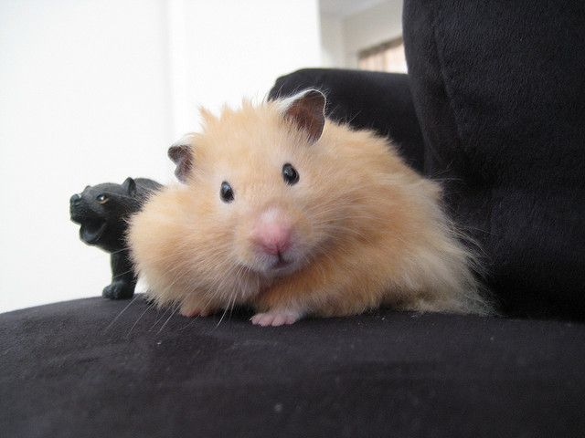 These 30 Adorable Hamsters Will Make You Want One For