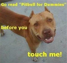 Pitbulls For Dummies Pitbull Terrier American Pitbull Terrier Pitbulls