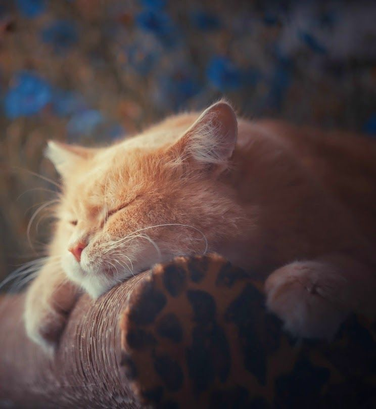 Sleeping my day away