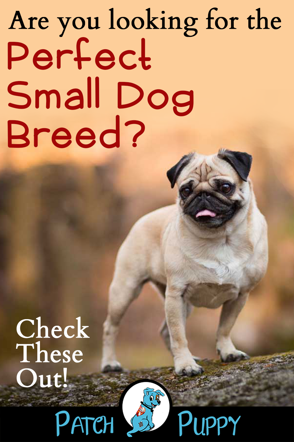 12 Dog Breeds That Are Small With Pictures With Images Dog Breeds Small Dog Breeds Breeds