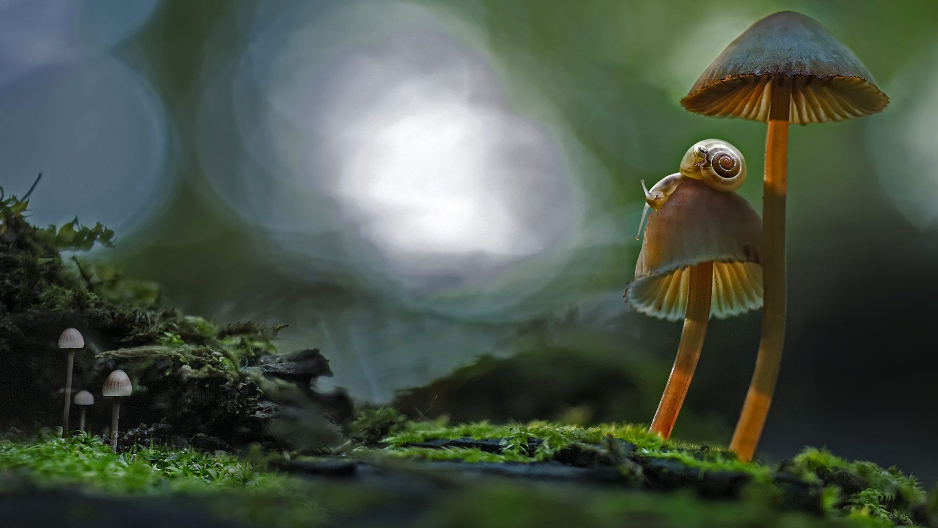 Two snails atop a mushroom (© Marianna Armata/Getty Images)