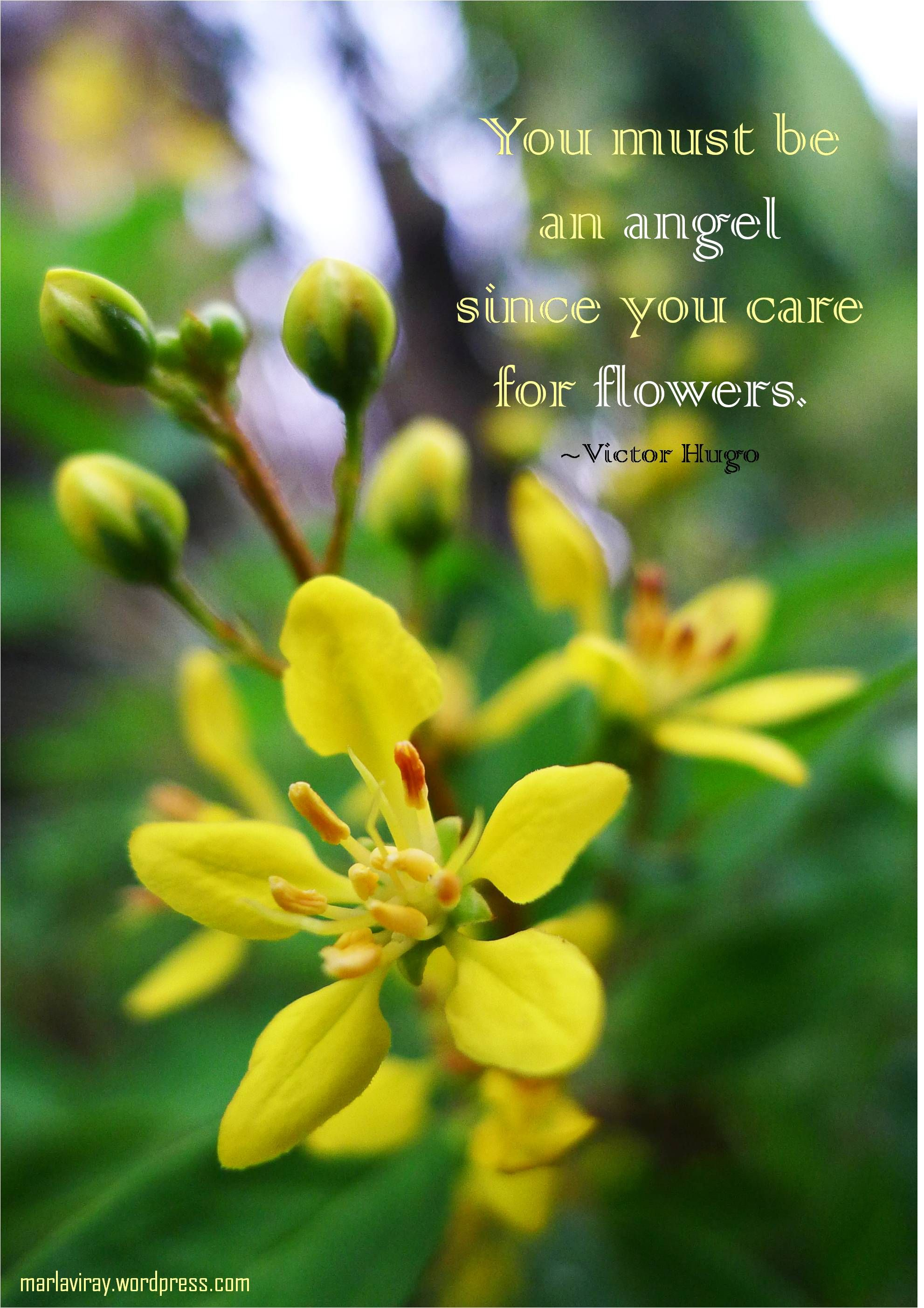 yellow flowers that always bloom. ^^ Flower quotes