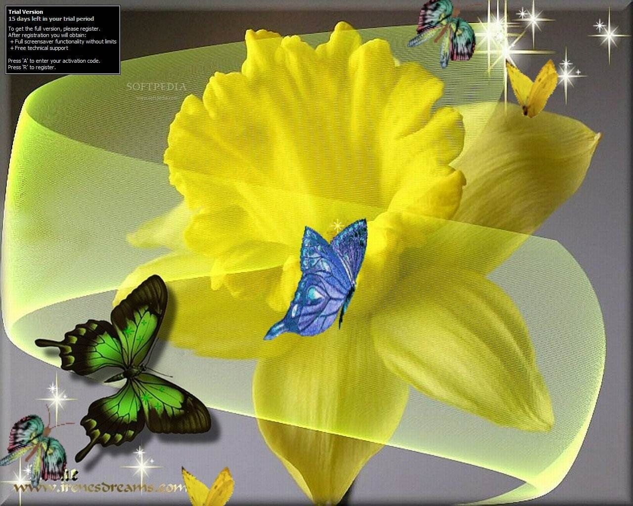 Butterfly Daffodil Screensaver screenshot 2 - The Butterfly Daffodil Screensaver will display on your desktop daffodil and butterflies that ...
