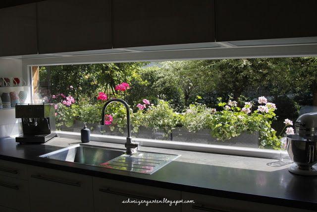 Pelargonium Kardinal Dark Pink Magenta Kitchen Windows Kuche Fenster Kuchenfenster Ideen Glasruckwand Kuche