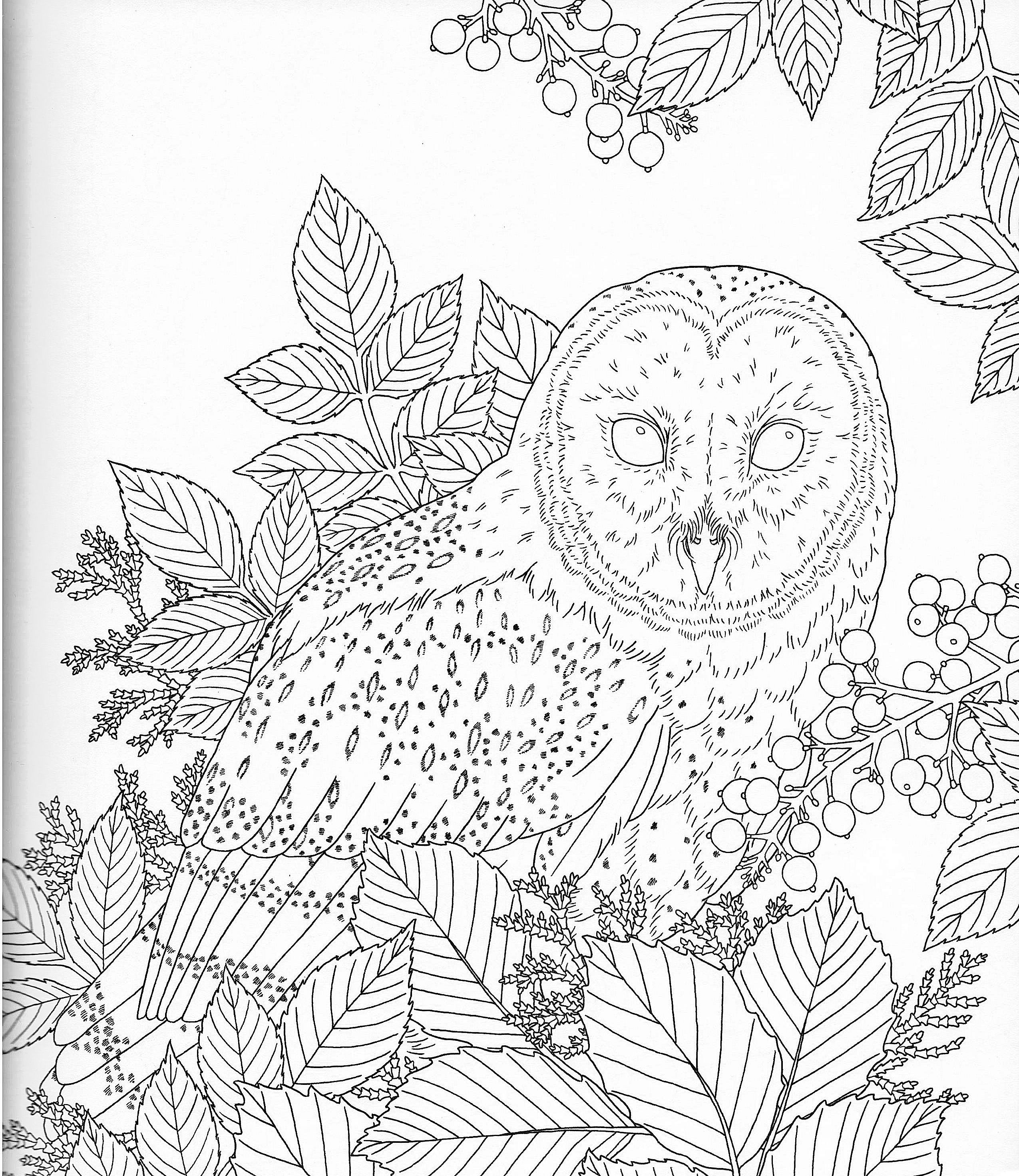 harmony of nature coloring book pg 16 color pages