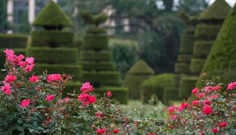 Rose & Topiary Garden - Longwood Gardens