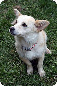 Adopted Owatonna, MN Mix. Meet FOXY a