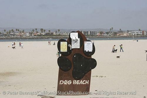 Dog Beach, Ocean Beach, San Diego, California (SD) by peterbphoto1390, via Flickr -- I really need to take my dog Diego to San Diego's dog beach...haha