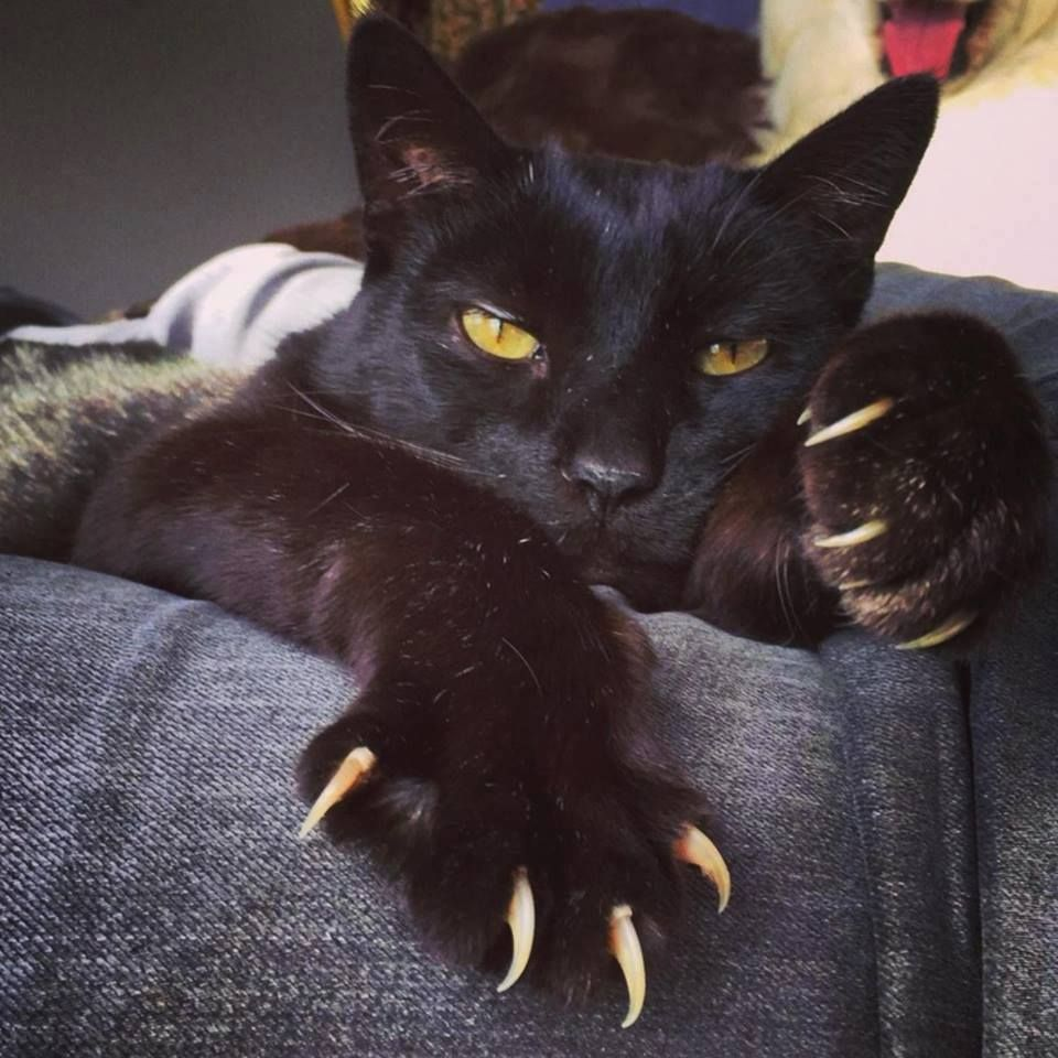 Great Claws Kitten Lover Cat Paws Cats