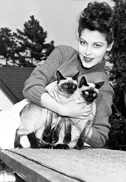 0 Ava Gardner with 2 siamese cats Chat fou, Photo chat