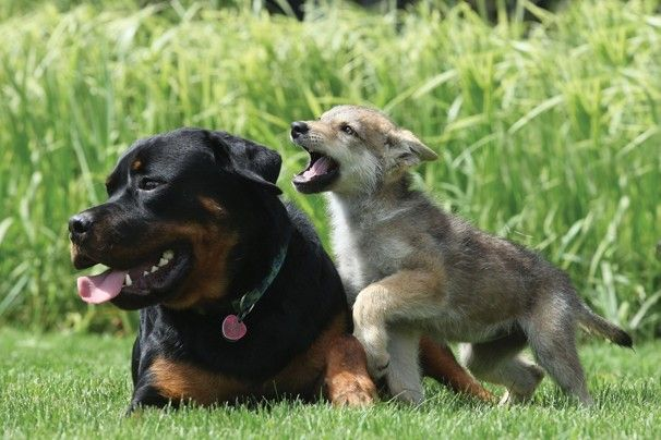 Unlikely Mothers Adoption In The Animal World Unusual Animal