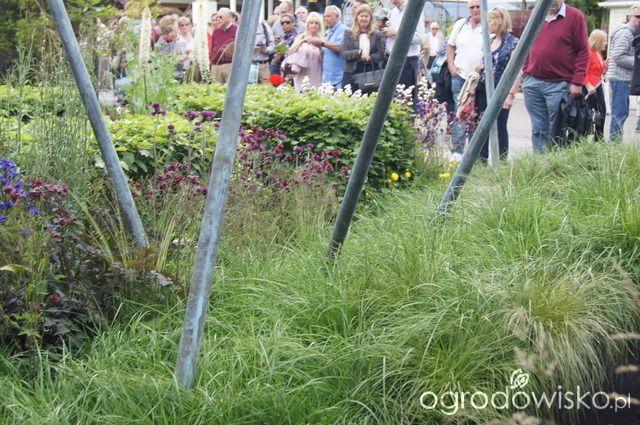 Ogród niby nowoczesny ale... - strona 1084 - Forum ogrodnicze - Ogrodowisko