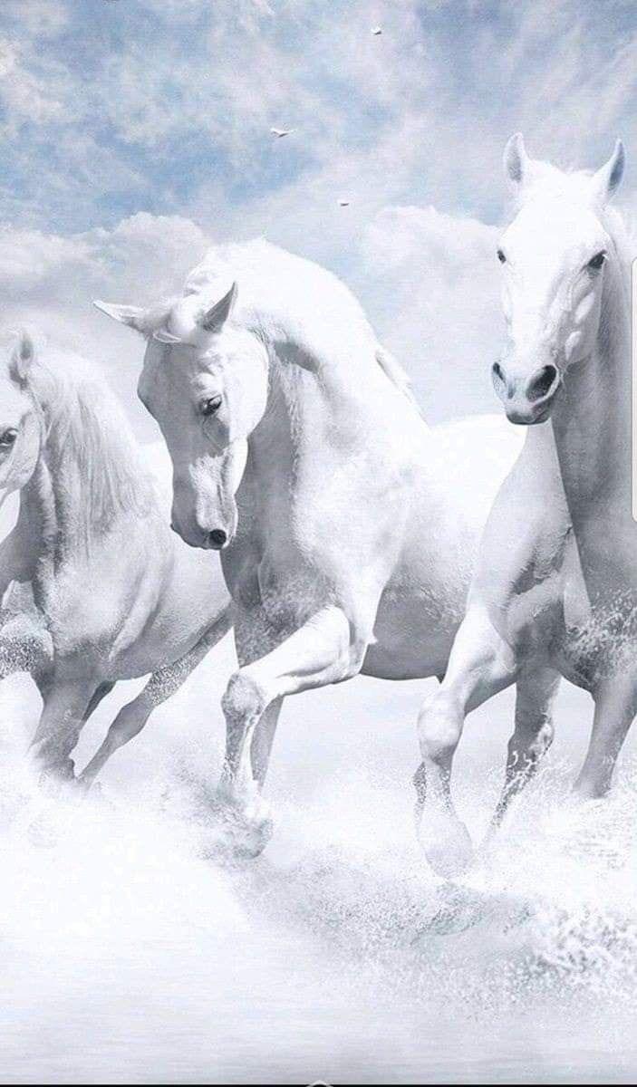 FREEIOS7 horsessunriseb parallax iphone wallpaper